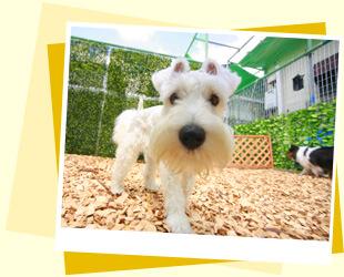 Pooch 犬の保育園一時預かり イメージ