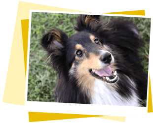 犬の保育園,一時預かり,ペットホテル,しつけ,トレーニング:千葉県船橋市 犬のペットホテル イメージ
