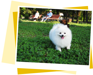 Pooch 犬の送迎サービス