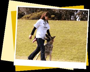犬の保育園,一時預かり,ペットホテル,しつけ,トレーニング:Pooch 犬の出張トレーニング イメージ