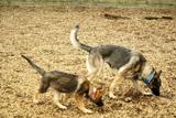 犬の保育園,一時預かり,ペットホテル,しつけ,トレーニング:Pooch 犬の出張トレーニング