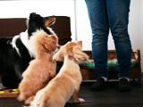 Pooch 犬の出張トレーニング