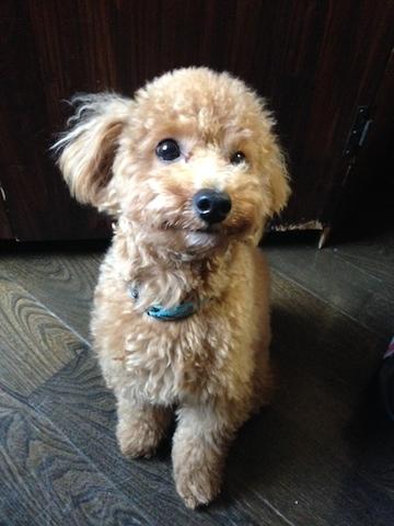 犬のペットホテルPooch ぷー写真