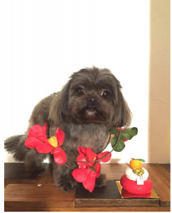 犬のトレーニング,しつけ,飼い方:スクリーンショット 2016-01-22 11.36.00