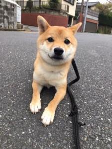 犬のトレーニング,しつけ,飼い方:unnamed