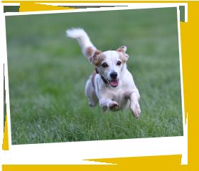 犬の保育園,一時預かり,ペットホテル,しつけ,トレーニング:災害発生時の対応