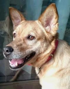 犬のトレーニング,しつけ,飼い方:チャロ子井原