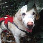 犬の保育園,一時預かり,ペットホテル,しつけ,トレーニング:犬のペットホテルPooch ラス太ちゃんの写真