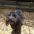 犬の保育園,一時預かり,ペットホテル,しつけ,トレーニング:犬のペットホテルPooch ぽっぷちゃんの写真