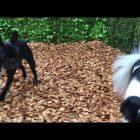 犬の保育園,一時預かり,ペットホテル,しつけ,トレーニング:xSCACpxwlkQsddefault.jpg
