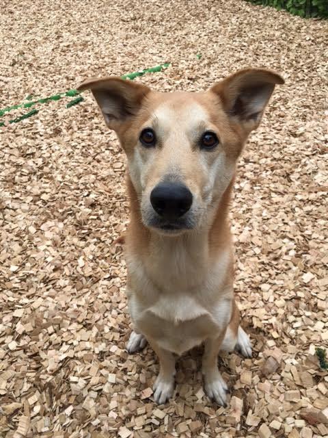 犬の保育園,一時預かり,ペットホテル,しつけ,トレーニング:犬のペットホテルPooch りくちゃんの写真
