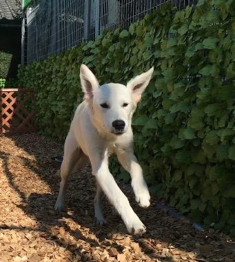 犬の保育園,一時預かり,ペットホテル,しつけ,トレーニング:犬のペットホテルPooch すいちゃんの写真