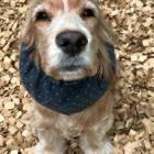 犬の保育園,一時預かり,ペットホテル,しつけ,トレーニング:犬のペットホテルPooch ソフィーちゃんの写真