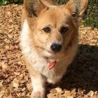 犬の保育園,一時預かり,ペットホテル,しつけ,トレーニング:犬のペットホテルPooch フレップちゃんの写真