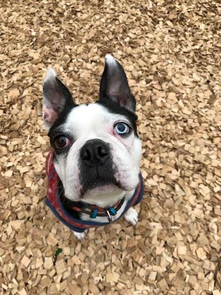 犬の保育園,一時預かり,ペットホテル,しつけ,トレーニング:犬のペットホテルPooch てんちゃんの写真