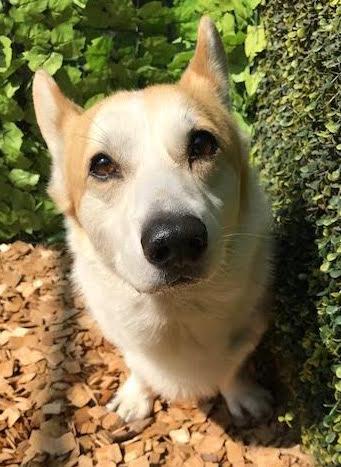 犬の保育園,一時預かり,ペットホテル,しつけ,トレーニング:犬のペットホテルPooch キーパーちゃんの写真