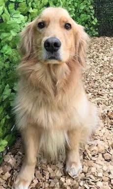 犬の保育園,一時預かり,ペットホテル,しつけ,トレーニング:犬のペットホテルPooch トニーちゃんの写真