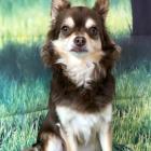 犬の保育園,一時預かり,ペットホテル,しつけ,トレーニング:犬のペットホテルPooch ルイくんの写真