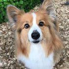 犬の保育園,一時預かり,ペットホテル,しつけ,トレーニング:犬のペットホテルPooch レオリーくんの写真