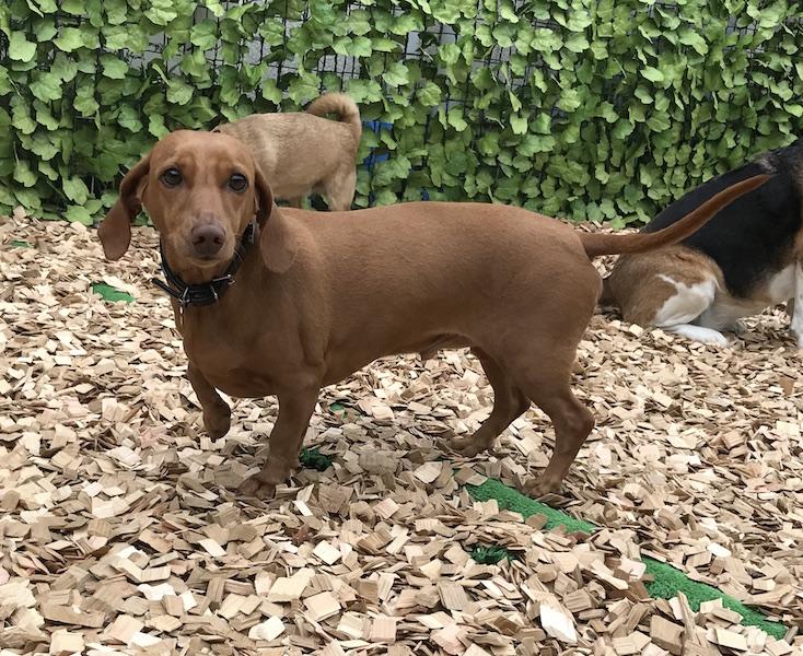 犬の保育園,一時預かり,ペットホテル,しつけ,トレーニング:犬のペットホテルPooch トトくんの写真