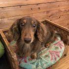 犬の保育園,一時預かり,ペットホテル,しつけ,トレーニング:犬のペットホテルPooch レオくんの写真