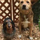 犬の保育園,一時預かり,ペットホテル,しつけ,トレーニング:犬のペットホテルPooch キングくん&コジローくんの写真
