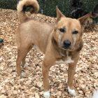 犬の保育園,一時預かり,ペットホテル,しつけ,トレーニング:犬のペットホテルPooch こじろーちゃんの写真