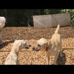 犬の保育園,一時預かり,ペットホテル,しつけ,トレーニング: