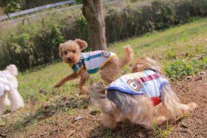 犬のトレーニング,しつけ,飼い方: